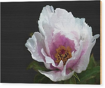 Tree Paeony I Wood Print