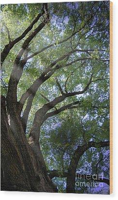 Tree Rays Wood Print