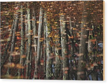 Tree  Reflect Wood Print by Karol Livote