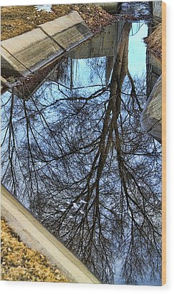 Tree Reflection From No Where Photography Image Wood Print by James BO  Insogna