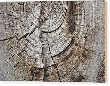 Tree Rings - Photography Wood Print by Ann Powell