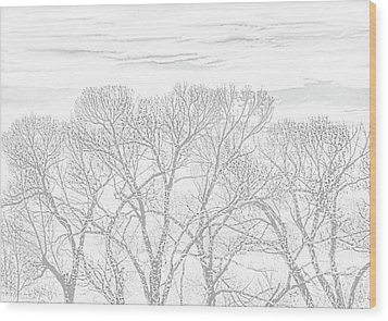 Wood Print featuring the photograph Tree Silhouette Gray by Jennie Marie Schell