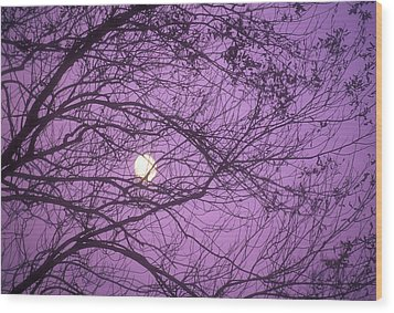Tree Silhouettes With Rising Moon In Cades Cove, Great Smoky Mountains National Park, Tennessee, Usa Wood Print by Altrendo Nature