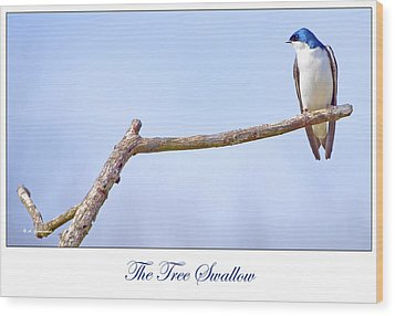 Tree Swallow On Branch Wood Print