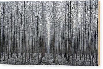Tree Symmetry Wood Print