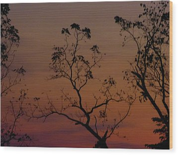 Wood Print featuring the photograph Tree Top After Sunset by Donald C Morgan