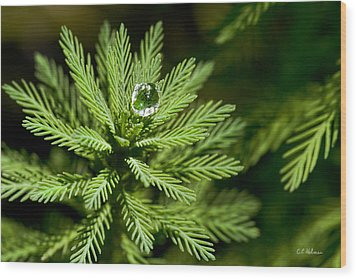 Tree Top Dew Drop Wood Print by Christopher Holmes