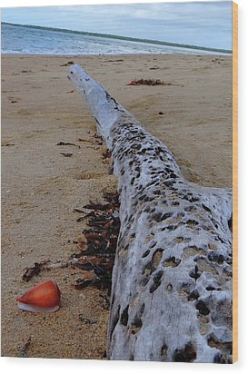 Tree Trunk And Shell On The Beach Full Size Wood Print