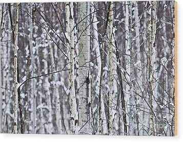 Tree Trunks Covered With Snow In Winter Wood Print by Elena Elisseeva