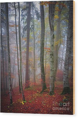 Wood Print featuring the photograph Tree Trunks In Fog by Elena Elisseeva