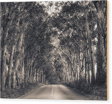 Tree Tunnel Wood Print by Robert  FERD Frank