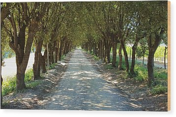 Wood Print featuring the photograph Tree Tunnel by Valentino Visentini