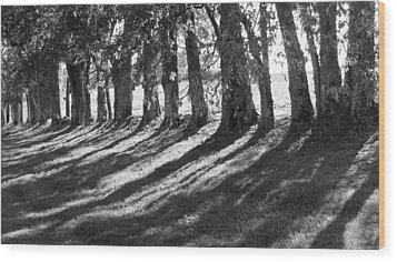 Treeline Wood Print by Amy Tyler