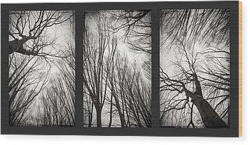 Treeology Wood Print by Dorit Fuhg