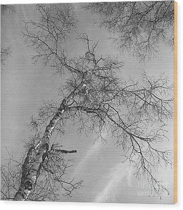 Trees Against Winter Wood Print by Arni Katz