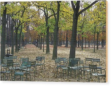 Trees And Empty Chairs In Autumn Wood Print by Stephen Sharnoff