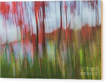 Wood Print featuring the photograph Trees And Lake by Elena Elisseeva