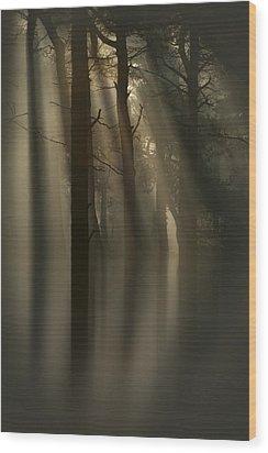 Trees And Light Wood Print