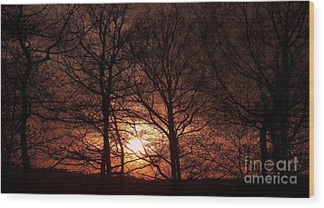 Trees At Sunset Wood Print by Michal Boubin