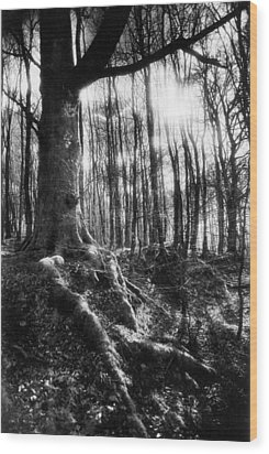 Trees At The Entrance To The Valley Of No Return Wood Print by Simon Marsden