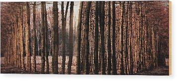Trees Gathering Wood Print by Wim Lanclus