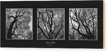 Trees In Threes Wood Print by Diane C Nicholson