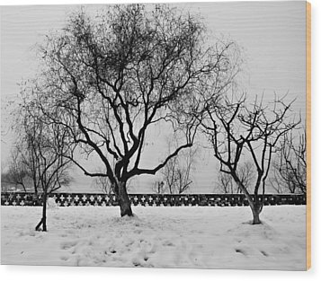 Trees In Winter Wood Print by Dean Harte