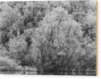 Trees On The River Wood Print
