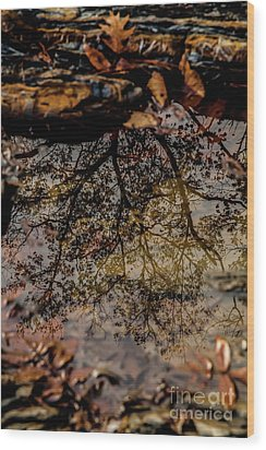 Wood Print featuring the photograph Tree's Reflection by Iris Greenwell