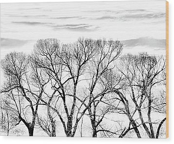 Wood Print featuring the photograph Trees Silhouette Black And White by Jennie Marie Schell