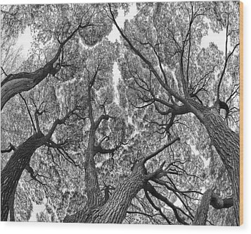 Wood Print featuring the photograph Trees by Vladimir Kholostykh