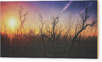 Treetop Silhouette - Sunset At Lapham Peak #1 Wood Print by Jennifer Rondinelli Reilly - Fine Art Photography