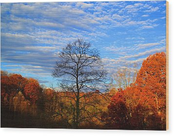 Wood Print featuring the photograph Treetops Sunrise by Kathryn Meyer