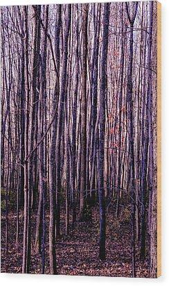 Treez Magenta Wood Print