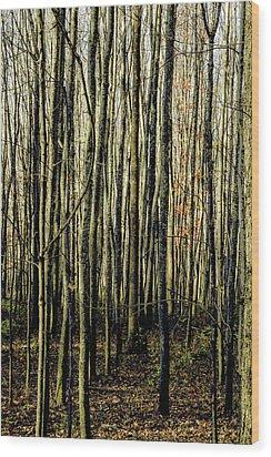 Treez Yellow Wood Print