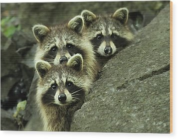 Tres Banditos Wood Print by Mircea Costina Photography