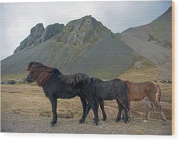 Wood Print featuring the photograph Tri - Color Icelandic Horses by Dubi Roman