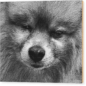 Tribute To Jojo Rip Buddy Wood Print