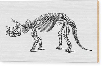 Triceratops Dinosaur Tee Wood Print by Edward Fielding