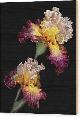 Tricolor Iris Pair Wood Print by Dave Mills