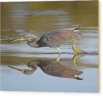 Tricolored Heron Wood Print by Brian Magnier