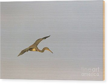 Tricolored Heron In Flight Wood Print by Louise Heusinkveld