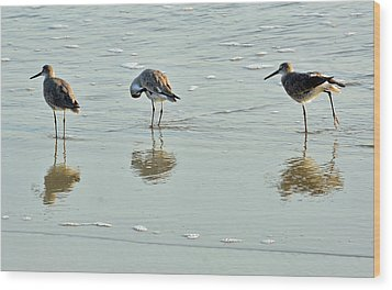 Trio Of Willets On Jekyll Wood Print by Bruce Gourley