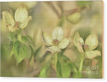 Wood Print featuring the digital art Triple Dogwood Blossoms In Evening Light by Lois Bryan