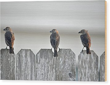 Wood Print featuring the photograph Triple Play by Teresa Blanton