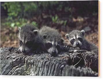 Wood Print featuring the photograph Triplets by Sally Weigand