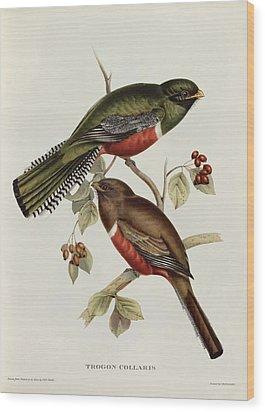Trogon Collaris Wood Print by John Gould