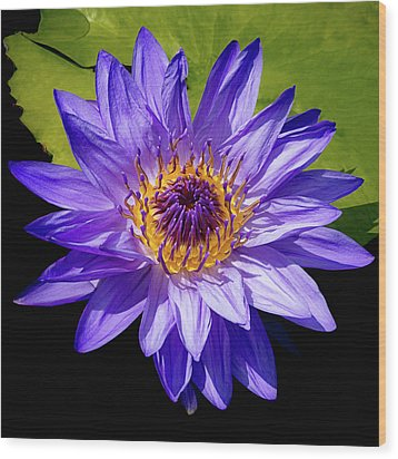 Wood Print featuring the photograph Tropical Day Blooming Water Lily In Lavender by Julie Palencia
