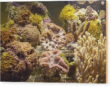 Tropical Fish Tank 10 Wood Print by Steve Ohlsen