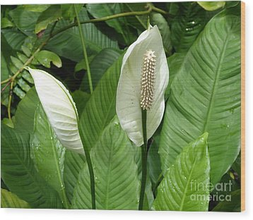 Tropical Flower Wood Print by Margaret Brooks